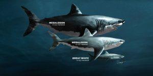 prehistoric-sharks
