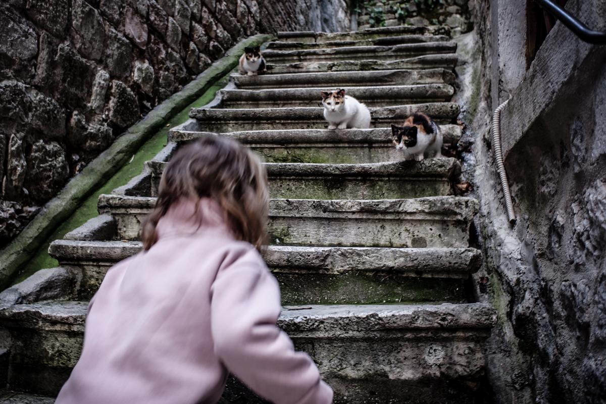 katten-kotor