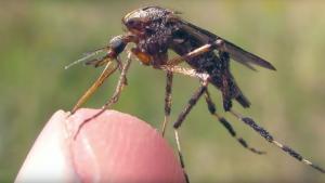 muggen-deet